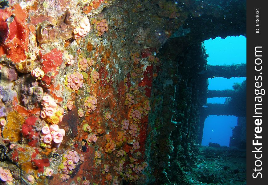 Wreck coral