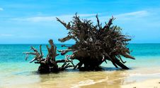 Free Uprooted Tree On A Beach Royalty Free Stock Images - 64825639