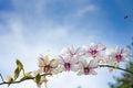 Free Background Stock Image - 64877611