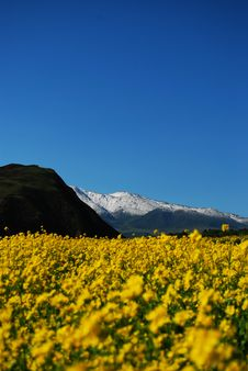 Free Fresh Flowers And Snow Mountain Stock Photography - 6490022