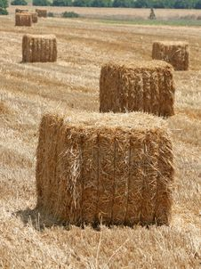 Free Hay Stack Royalty Free Stock Images - 6490419
