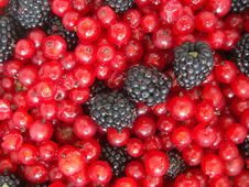 Free Berry Background Royalty Free Stock Photo - 6491535