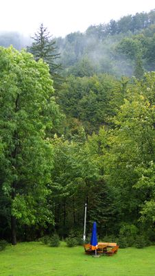 Free Rain Forest Royalty Free Stock Photography - 6492187