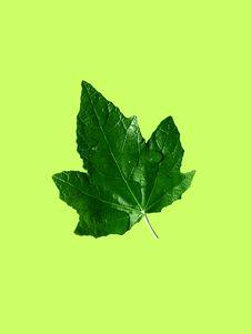 Free Leaf On Green Stock Photos - 6492493