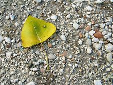 Free Fallen Leaf Royalty Free Stock Photos - 6492808