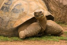 Free Giant Turtle Stock Image - 6492981