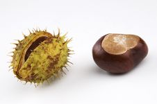 Free Conkers Royalty Free Stock Images - 6493659