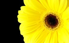 Free Sunflower Stock Images - 6494054