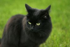 Free Black Cat Stock Image - 6494161
