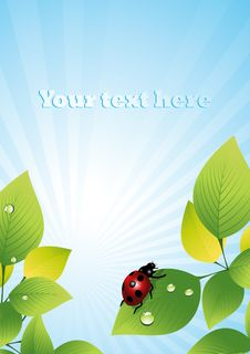 Free Ladybird_on_leaf Royalty Free Stock Images - 6494349