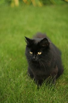 Free Black Cat Royalty Free Stock Photo - 6494415