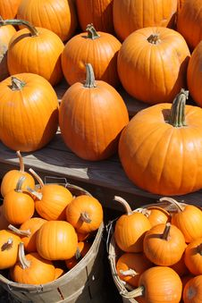 Free Pumpkins Stock Photo - 6494840