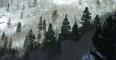 Free Snowy Mountain Forest Royalty Free Stock Photography - 6495457