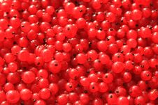 Free Currants Stock Images - 6497264