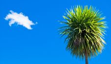 Free Palm Tree And A Cloud Stock Image - 6497451