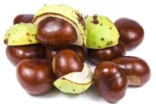 Free Many Brown Chestnuts Stock Photography - 6497522