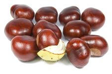 Free Many Brown Chestnuts Stock Photos - 6497523