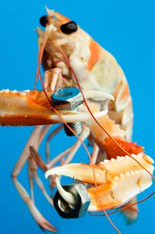 Free Shrimp Royalty Free Stock Image - 6497636