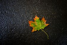 Autumn Leaf On Asphalt Stock Photos