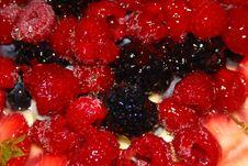 Free Berries Stock Photo - 6498980