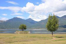 Free Trees & Lake Royalty Free Stock Photos - 6498998