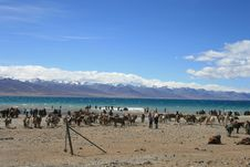 Free Tibet S Nam Co Lake Royalty Free Stock Photography - 6499437
