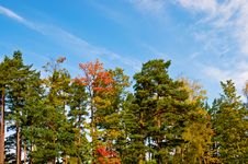 Free Early Autumn Royalty Free Stock Photography - 6499677