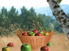 Free Apples In The Basket Royalty Free Stock Photos - 6499988
