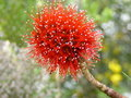 Free Exotic Red Flower Royalty Free Stock Image - 655196
