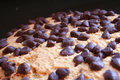 Free Chocolate Chip Cookie Stock Images - 656084