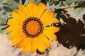 Free Golden Flower Royalty Free Stock Image - 657696