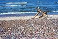 Free Driftwood Stock Image - 658701