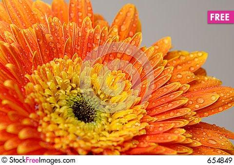 Daisy flower 3 Stock Photo