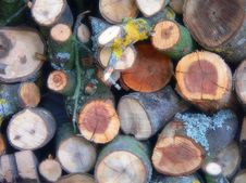 Free Cuted Wood Royalty Free Stock Photo - 650175