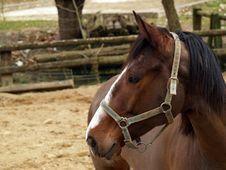 Free Horse Head Stock Image - 650421