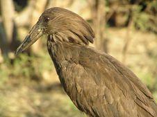 Free Bird Stock Image - 651031