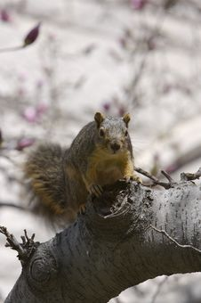 Free Squirrel Stock Photo - 652340