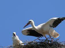 Free Stork Stock Photos - 653603
