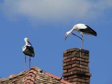 Free Stork Royalty Free Stock Photography - 653627