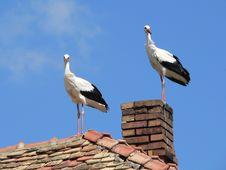 Free Stork Royalty Free Stock Photos - 653628