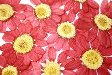 Dried Flowers Stock Photo