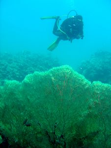 Free Diver With Gorgonian Fan Stock Photography - 653862