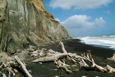Free Driftwood Beach Royalty Free Stock Photos - 654868