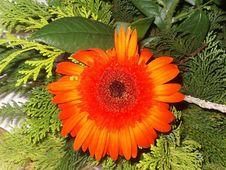 Free Flower Royalty Free Stock Photo - 655015