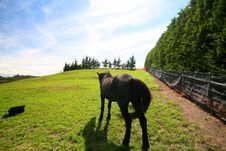 Free Horse Turning His Back In A Field Royalty Free Stock Photos - 655398
