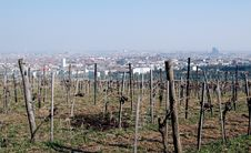 Free Vineyard Over Vienna Stock Photo - 655470