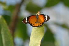 Free Butterfly On Leaf 2 Royalty Free Stock Photos - 655518