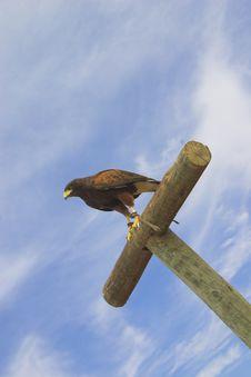 Free Eagle V Royalty Free Stock Photo - 656375