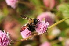 Free Bee Stock Photo - 656920