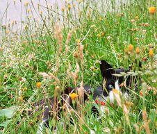 Free Black Cat Stock Image - 656941